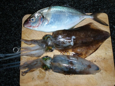 Squid and Trevally